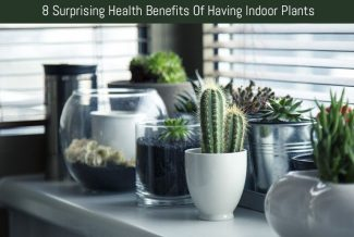 8 Surprising Health Benefits Of Having Indoor Plants