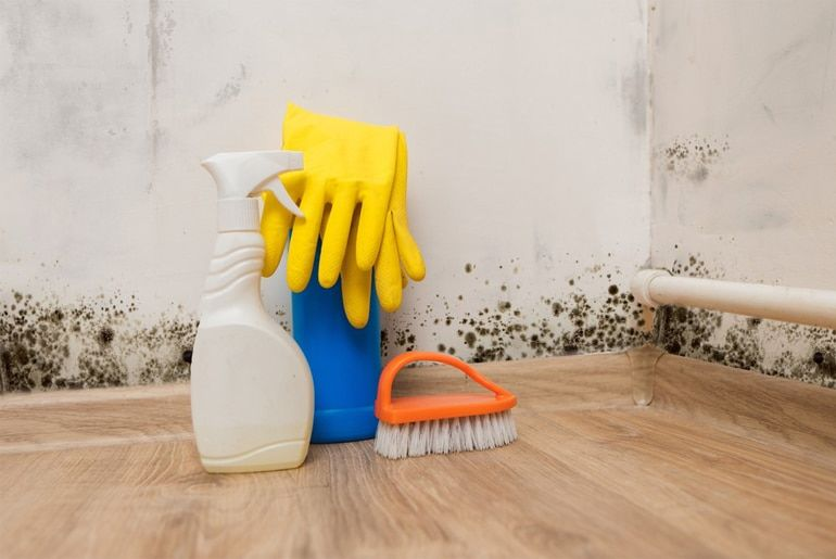 Image result for Why mold remedies are important?
