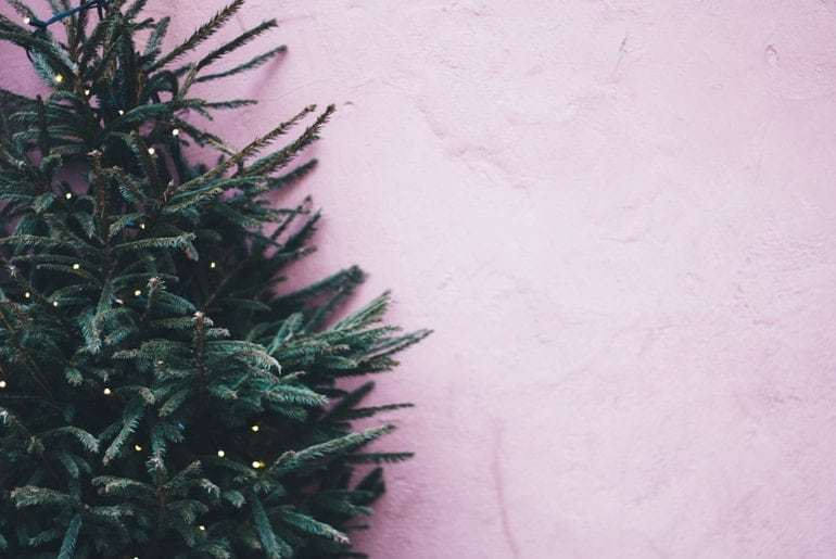 Weekly Round-Up #207: Christmas Trees, A Divided UK and Post Holiday Email